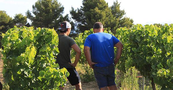 Père et fils, Laurens vignoble des templiers